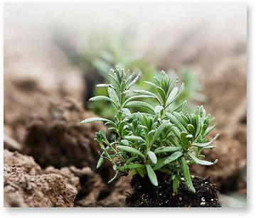 Seed-img